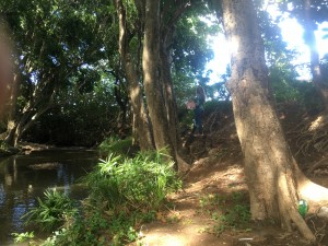 Manoa Stream